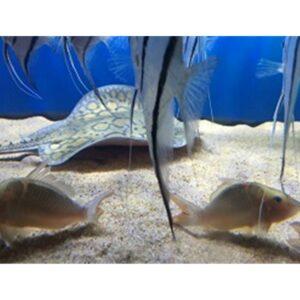 Aquarium Sand Substrate - Per Lb
