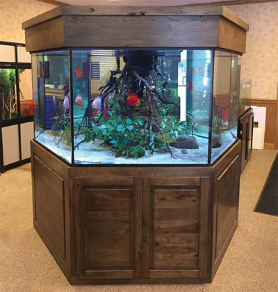 Hexagon Shaped Aquarium
