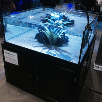 Saltwater Aquariums - Rimless
